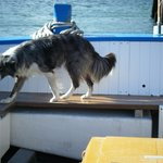 The dog on the boat