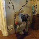 Guard dog/deer