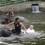 Swimming with the elephant