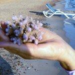 Коралл, который нашли на берегу