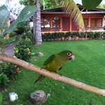 A little visitor at Punta Roca
