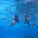 Snorkeling shot, not great quality, just ok