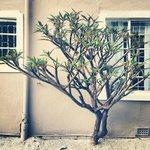 Privacy tree