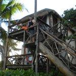 Eco chic tree house!