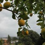 Lemon Trees at Antiche Mura