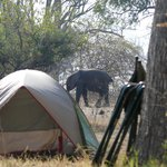 Elephant visiting our campsite inside the park