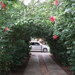 Beautiful archway of hibiscus flowers at the entrance of Hotel Tropix