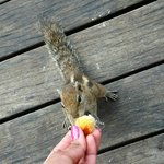 Feed squirrels during breakfast