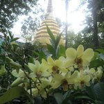 Orchid Framed Chedi