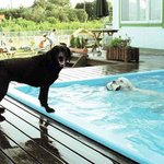 pooldogs