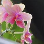 Orchid at Thapasya
