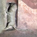 the famous MOUSE in the Cathedral