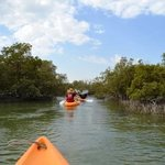 kayaking through eastern mangroves