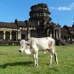 Otra visitante de Angkor Wat