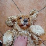 Der Hund von Zia Lina - Musste einfach gezeigt werden! :)