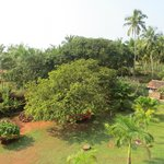 View - Cashew tree
