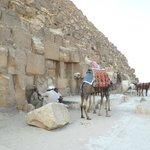 """""""корабли пустыни"""" и бедуины у пирамиды Хеопса"""