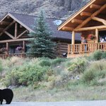 black bear walking in front of cabins