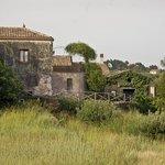 Seitenansicht vom Olivenhain aus