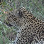 leopard up close and personal....