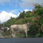 Beautiful Animals on the roadside to Gutside
