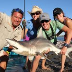 Black tip reef shark caught on 10 lb. test line - maybe 40 lbs.