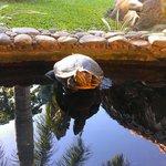 turtle in the restaurant yard