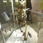 Skeletal Composite