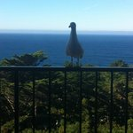 Our Seagull Friend (: