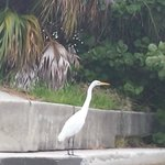 Fancy Bird