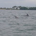 Dolphins playing for us