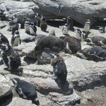 well looked after penguins
