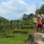 Rice Terraces near Ubud.