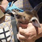 Josephine's Kangaroo Sanctuary