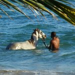 Badevergnügen Pferd und Reiter