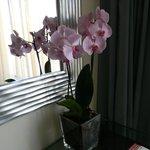 Живые орхидеи в номере