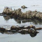 Seals and sea birds