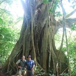 Nov 2013 - Marcos's favourit Strangler Fig tree