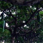 cool bottle light decos on banyan trees at pool