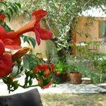 Le jardin, un petit coin de paradis soigneusement entretenu