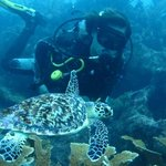 Tortuga Carey en inmersión con Manta Divers