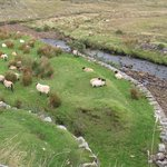 Water, sheep and pasture - very common and pleasing sight on the trail