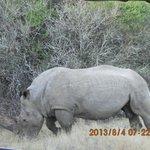podczas safari