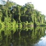 Prachtige bomen langs de rivier