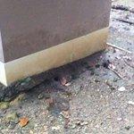 Nid de varan sous notre bungalow