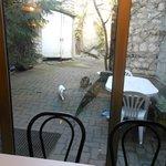 vue du jardin de la salle du petit déjeuner