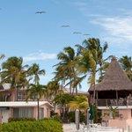 Flight of pelicans over hotel