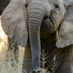 Baby Elephant at Siyafunda Makalali
