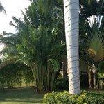 Lawn At Villa