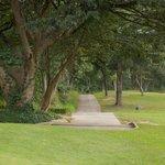 Golf buggy track along fairway.